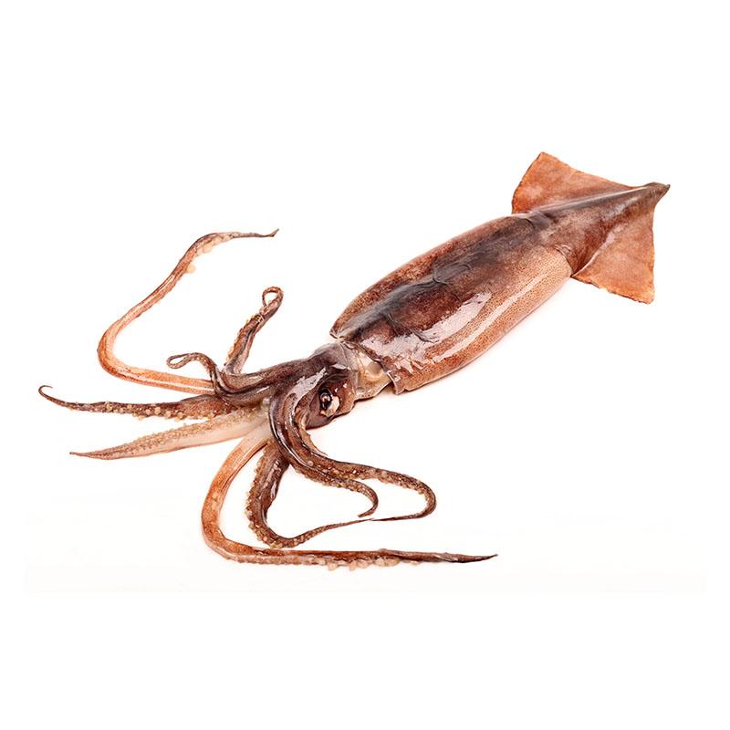 Squid Featured Image