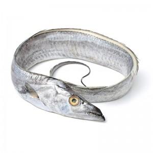 Ribbonfish